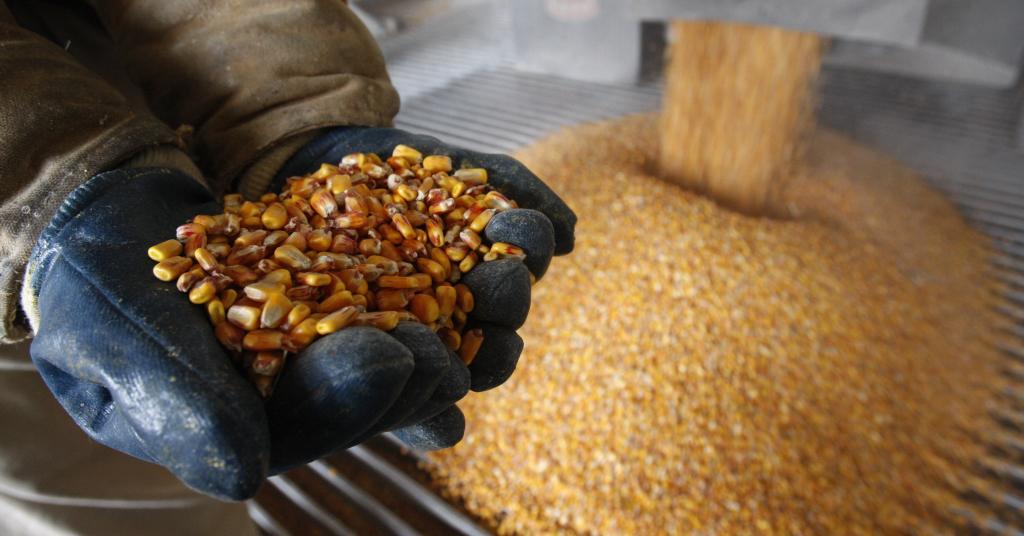 Placeholder - loading - Processo de produção do etanol de milho em planta no estado de Ontario, nos EUA 10/04/2008 REUTERS/Mark Blinch