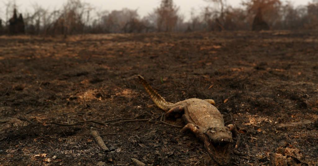 Placeholder - loading - Jacaré morto no Pantanal 31/08/2020 REUTERS/Amanda Perobelli