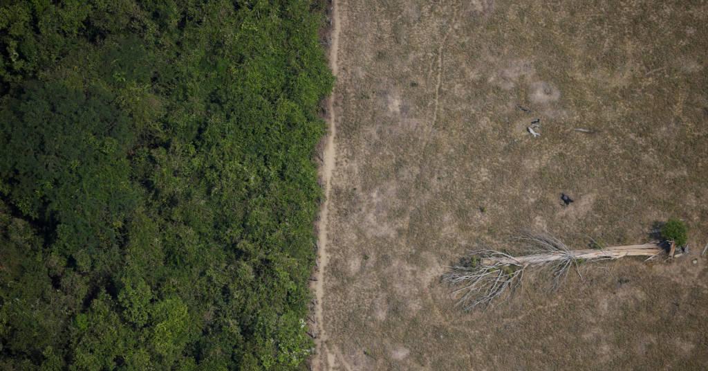 Placeholder - loading - Área desmatada da Amazônia perto de Porto Velho, em Rondônia 14/08/2020 REUTERS/Ueslei Marcelino