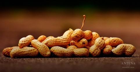 FDA quer aprovar novo tratamento para alergia ao amendoim