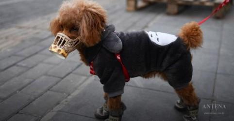 Placeholder - loading - Imagem da notícia Primeiro cachorro com Covid-19