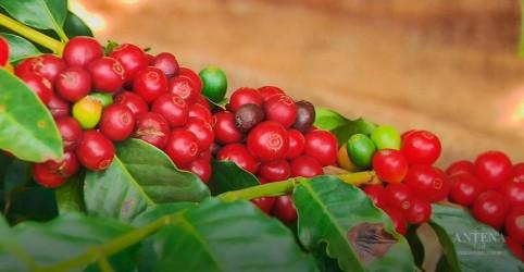 Estudo descobre que café pode ajudar no emagrecimento