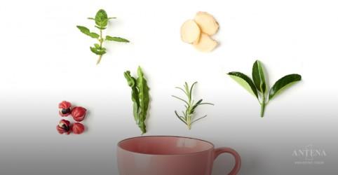 Placeholder - loading - Imagem da notícia Plantas capazes de curar doenças
