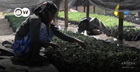 Placeholder - loading - Imagem da notícia Etiópia: Produtores locais abrem caminho para mercado internacional