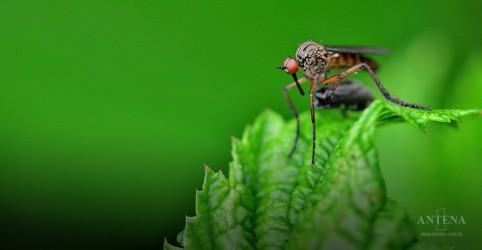 Placeholder - loading - Imagem da notícia Picada de mosquito causa morte cerebral