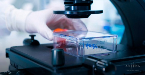 Placeholder - loading - Edição de genes pode corrigir até 89% de defeitos genéticos