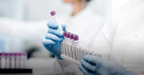 Câncer de pâncreas desparece em ratos