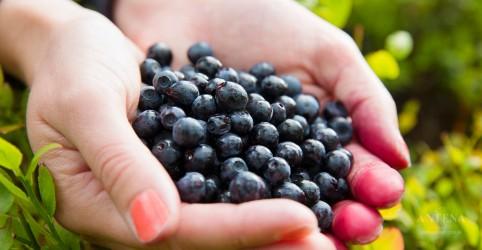 Os benefícios do açaí para a saúde