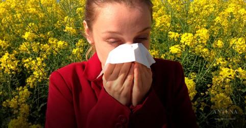 Placeholder - loading - Imagem da notícia 3 dicas para minimizar as alergias na primavera