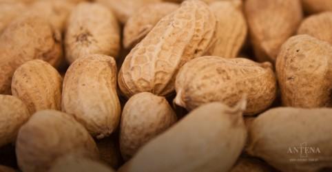 Placeholder - loading - Imagem da notícia Fornecer amendoim para bebês ajuda a prevenir alergia