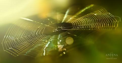 Placeholder - loading - Imagem da notícia Todos nós nascemos com medo de aranhas e cobras