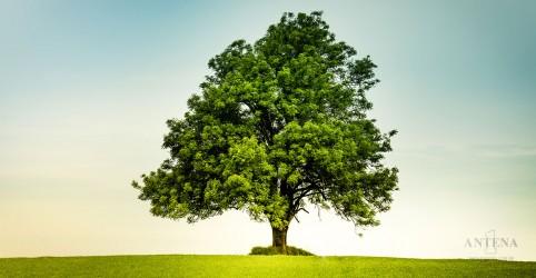Placeholder - loading - Imagem da notícia Quantidade de árvores influencia na longevidade