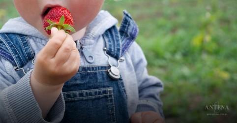 Placeholder - loading - Imagem da notícia Alimentos sólidos na dieta do bebê