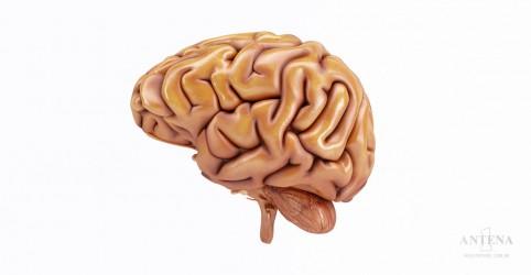 Placeholder - loading - Imagem da notícia Aprenda a cultivar novos neurônios cerebrais