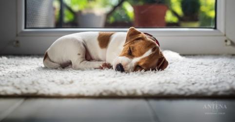 Viver experiências negativas impactam no sono de cachorros