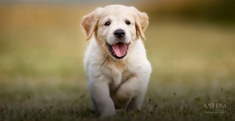 Placeholder - loading - Imagem da notícia Estudo avalia a empatia dos cães