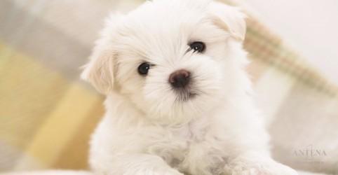Placeholder - loading - Imagem da notícia Intoxicação de cães é maior no Natal