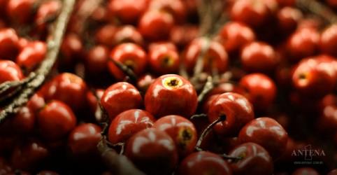 Placeholder - loading - Imagem da notícia Fruta amazônica auxilia a emagrecer