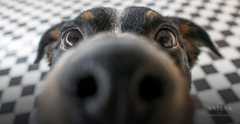 Placeholder - loading - Imagem da notícia Cães são considerados da família por todos