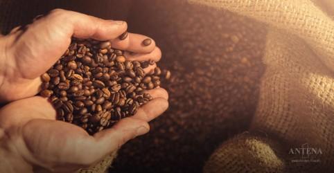Placeholder - loading - Imagem da notícia Café arábica pode inibir câncer de próstata, sugere novo estudo