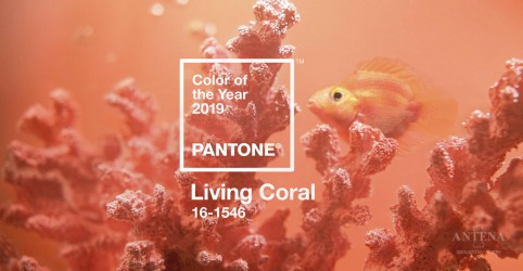 """Placeholder - loading - Imagem da notícia A cor de 2019 será o """"Living Coral"""