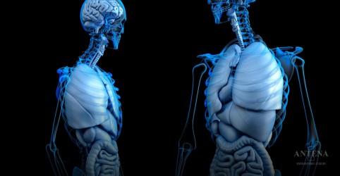 Placeholder - loading - Imagem da notícia Substância é capaz de derreter gordura