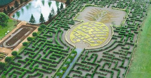 Placeholder - loading - Imagem da notícia Conheça o Dole Plantation: Pineapple Garden Maze