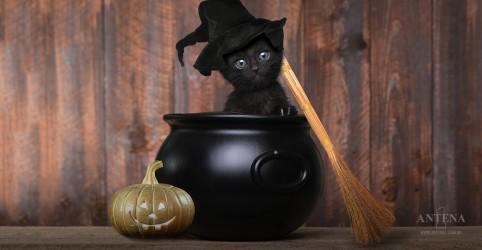Placeholder - loading - Imagem da notícia Gatos pretos ainda sofrem preconceito; entenda