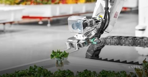 Fazenda quer utilizar apenas robôs no processo de produção