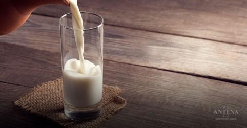 Placeholder - loading - Imagem da notícia Saiba mais sobre o leite de camelo