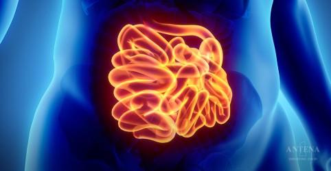 Placeholder - loading - Imagem da notícia Teste simples detecta câncer intestinal