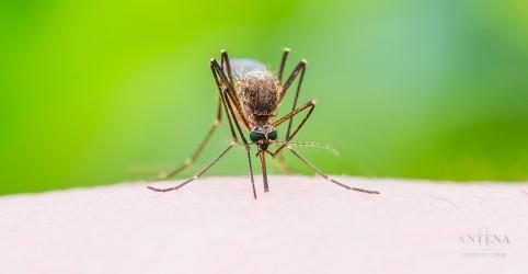 Placeholder - loading - Imagem da notícia Aedes aegypti pode transmitir uma nova doença