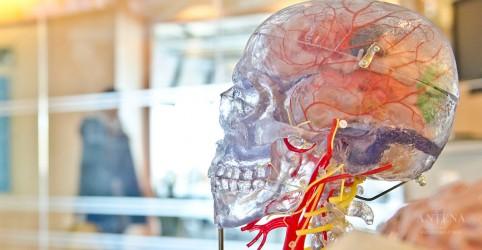 Placeholder - loading - Imagem da notícia Doença degenerativa pode ser corrigida