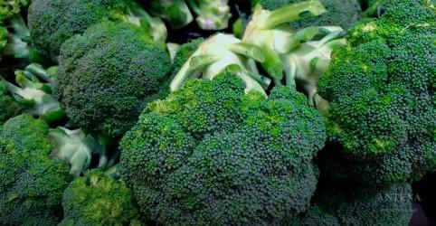 Placeholder - loading - Imagem da notícia Veja qual é o melhor modo de preparar brócolis