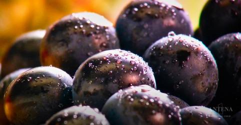 Placeholder - loading - Imagem da notícia Como lavar frutas e verduras