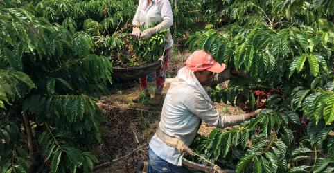 Placeholder - loading - Brasil eleva previsão de safra de café para recorde de quase 60 mi sacas
