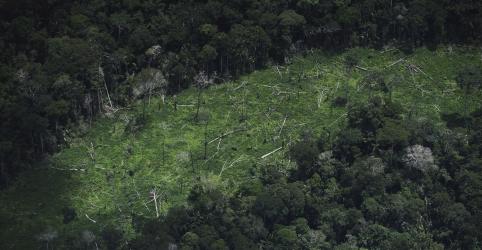 Aumento do desmatamento em terra indígena ameaça tribo isolada da Amazônia, diz ONG