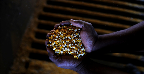 Placeholder - loading - Conservadora na previsão de soja do Brasil, Conab vê salto na safra de milho