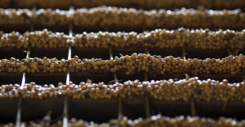 Plantio de soja no Brasil atinge 20% e se firma como mais rápido da história