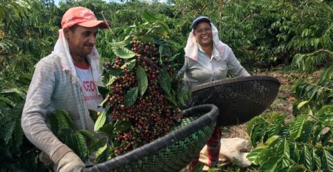 ENFOQUE-Cafeicultor do Brasil reduz tratos nas lavouras por maiores custos e preços fracos