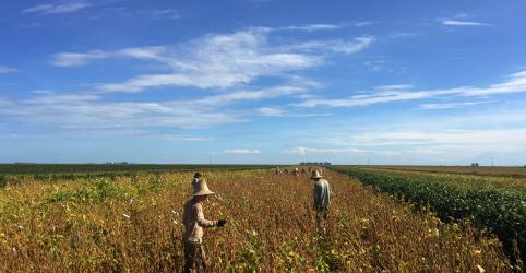 Placeholder - loading - Imagem da notícia Safras prevê produção recorde de soja no Brasil em 18/19, aumento em milho