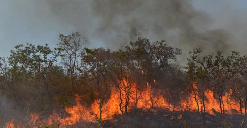 Placeholder - loading - Imagem da notícia Estudo do MPF mostra queimadas em 1/3 das áreas de desmatamento ilegal já identificado