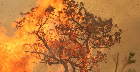 Política de Bolsonaro deixa floresta e defensores ainda mais vulneráveis, diz relatório
