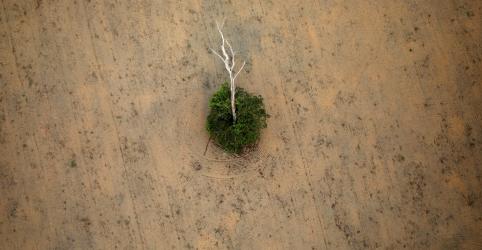 Placeholder - loading - Nenhuma árvore será salva no Brasil se acordo com Mercosul for barrado, diz grupo de engenharia alemão
