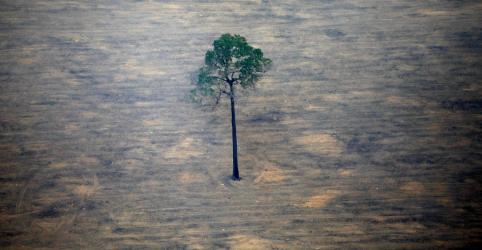 Doadores internacionais vão desbloquear US$500 mi em ajuda para florestas tropicais, diz França