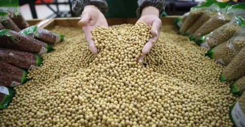Placeholder - loading - Imagem da notícia Importações de soja dos EUA pela China disparam em agosto; Brasil mantém maior fatia