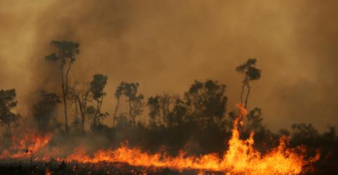 Placeholder - loading - Imagem da notícia Incêndios florestais podem prejudicar chuvas em cinturão agrícola sul-americano, alertam cientistas