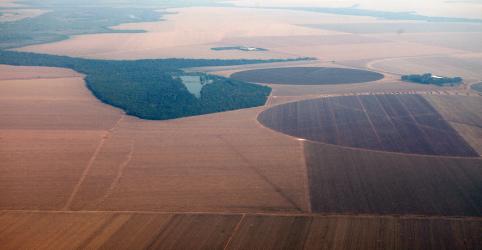 Placeholder - loading - Imagem da notícia Conab vê nova safra de soja em recorde de 120,4 mi t; recuo de 1,7% no milho