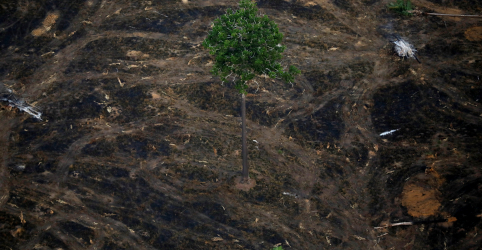 Placeholder - loading - Desmatamento da Amazônia sobe 93% no ano até setembro, diz Inpe