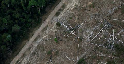 Desmatamento na Amazônia dispara e atinge maior nível em 11 anos